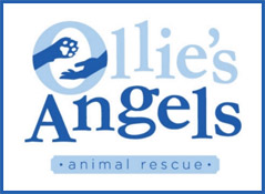 Ollie's Angels Animal Rescue