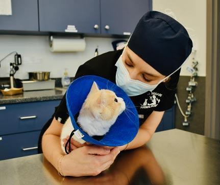 veterinarians-long-island-ny-1