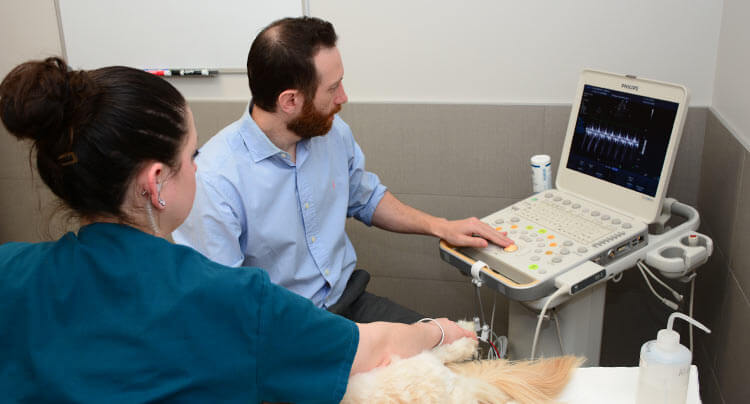 Veterinary Cardiology at Court Square Animal Hospital