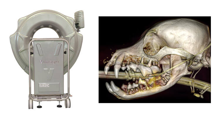 Veterinary CT Scan Imaging at Court Square Animal Hospital