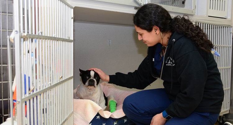 Pet Hospice Care at Court Square Animal Hospital