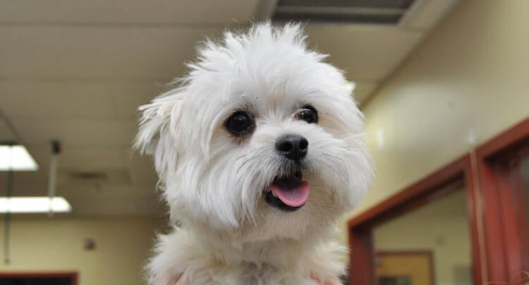 Pet Neurology services at Court Square Animal Hospital, NY