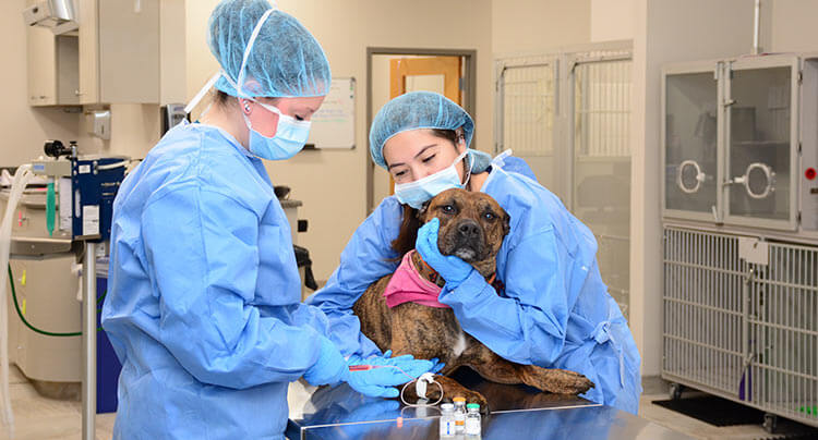 Veterinary Oncology services at Court Square Animal Hospital, NY