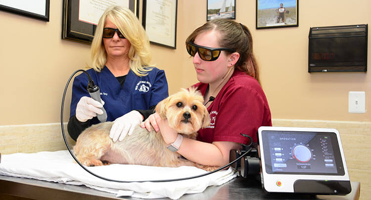 Pet Laser Therapy treatments at Court Square Animal Hospital