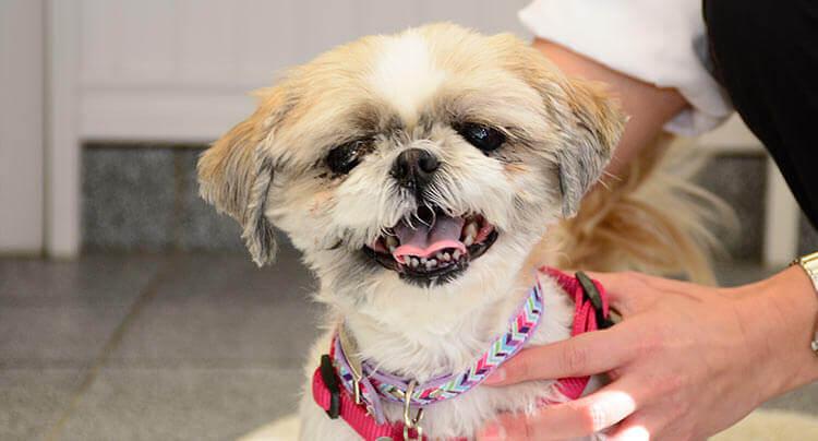 Senior Canine Care at Court Square Animal Hospital