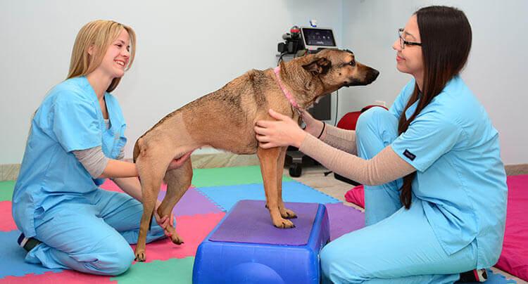 Pet Rehabilitation Services at Court Square Animal Hospital