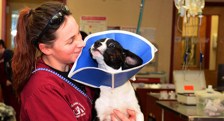 Frequently asked questions from our clients at Court Square Animal Hospital
