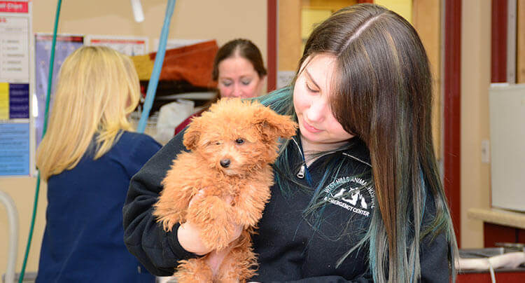 Court Square Animal Hospital works with the community