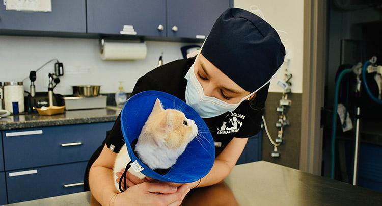 Advanced Medical Care Court Square Animal Hospital