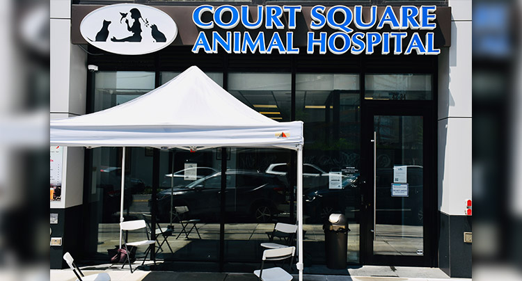 Contact Court Square Animal Hospital