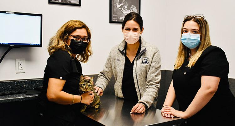 Feline Wellness Care at Court Square Animal Hospital